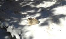 Not Joci. Basking rabbit.